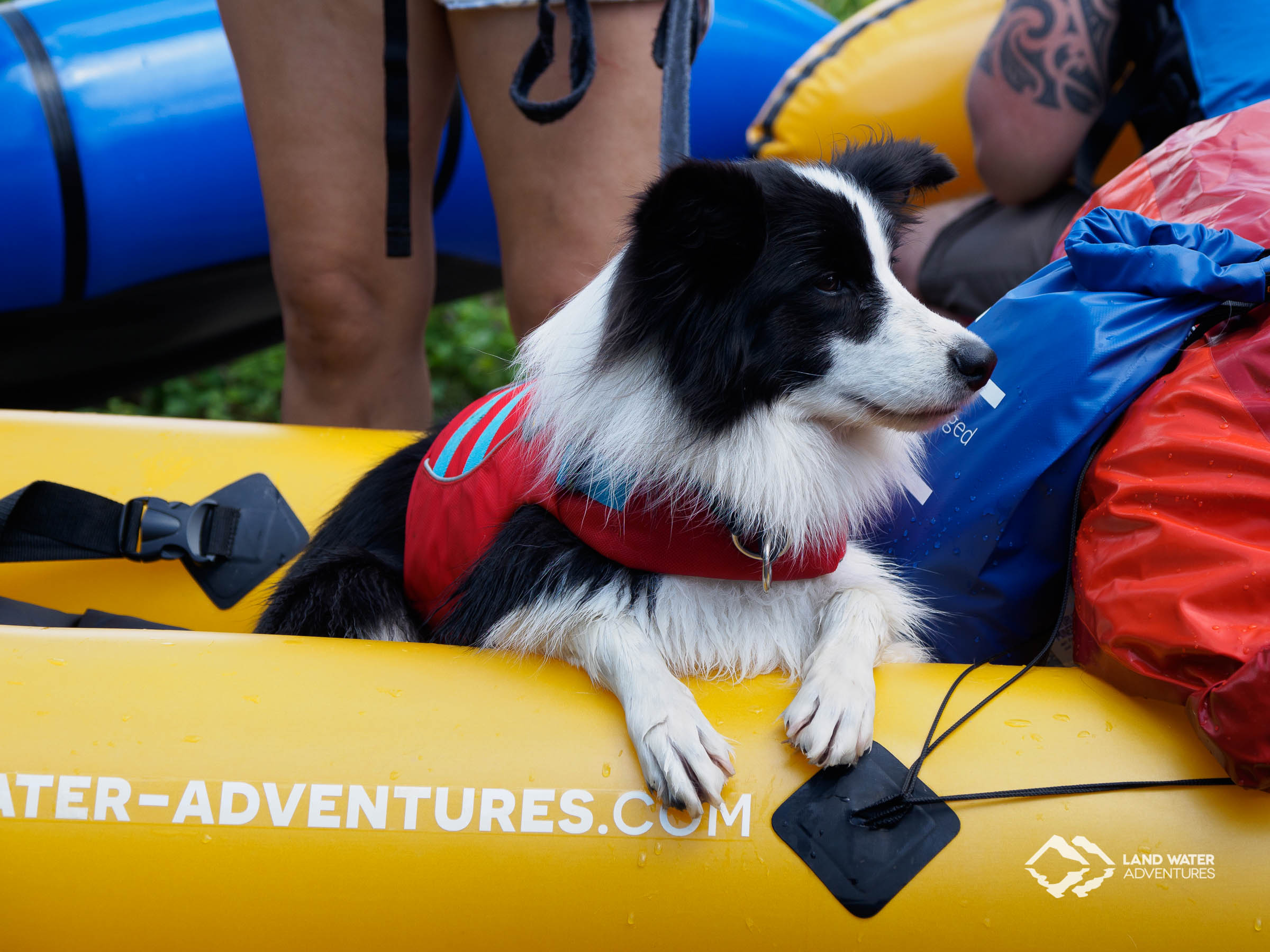 Packrafting dog at Nahe © Land Water Adventures